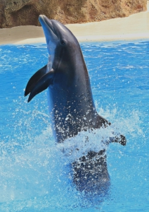 Delfin Vibrator